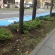 ある日の昼休み。北一条通にもうけられた自転車用のブルーレーンを横目に、人工的な「まち」の中にぐいぐいと入り込んでくる自然をウォッチングしてみました。